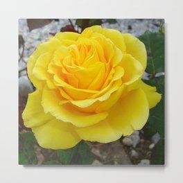 Golden Yellow Rose with Garden Background Metal Print