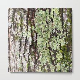 Tree Bark Lichen Metal Print