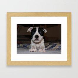 Baby Pitbull Framed Art Print