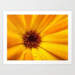 Calendula officinalis Art Print