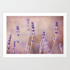 lavender garden Art Print