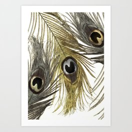 Gold and Silver Peacock Feathers Art Print