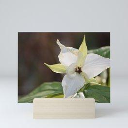 A White Trillium in the Smoky Mountains Mini Art Print