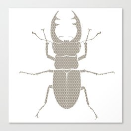 beetle with patterns Canvas Print