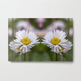 Colourful mirroring daisy flowers Metal Print