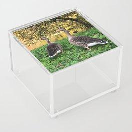 Birds in London Acrylic Box