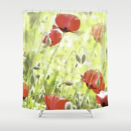 Poppies in the bright sunshine Shower Curtain