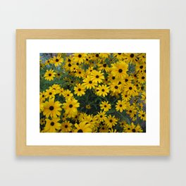 Black-Eyed Susan Bouquet Framed Art Print