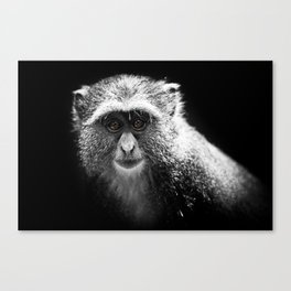 Vervet Monkey I Canvas Print