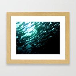 Thousands of jack fish Framed Art Print