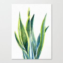 TROPICAL SNAKE PLANT Canvas Print
