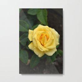 la rose d'or Metal Print