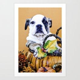 Chubby Bulldog Puppy in Pumpkin Basket Art Print