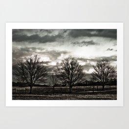 Shady Day Tree's Art Print