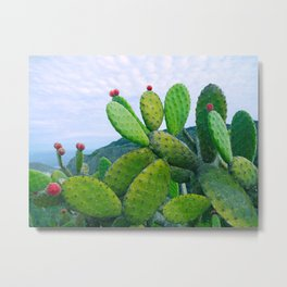 Blooming cacti Metal Print