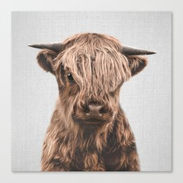 Highland Calf - Colorful Canvas Print