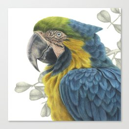 Blue & Yellow Macaw Canvas Print