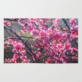 Cherry Blossoms in Spring Rug