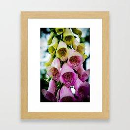 Bellflower Framed Art Print