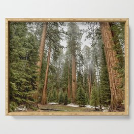 Sequoias in the Fog Serving Tray