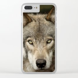 The intensity of the timber wolf Clear iPhone Case