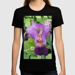 Purple Iris- 2 T-shirt