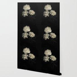 White peonies2 Wallpaper