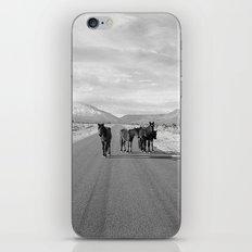 Spring Mountain Wild Horses iPhone & iPod Skin