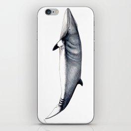 Minke whale iPhone Skin