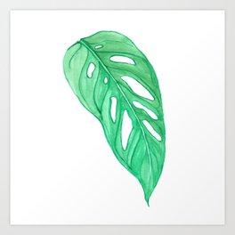 monstera obliqua single leaf Art Print