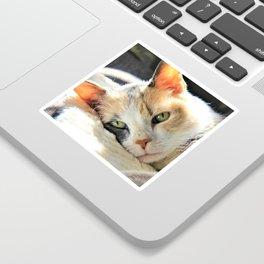Kitty Light by Reay of Light Sticker