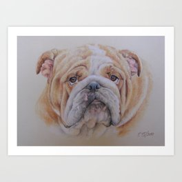English Bulldog face Cute dog portrait Pastel drawing Art Print