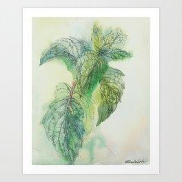 Fresh Mint Art Print