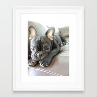 iggy Framed Art Prints featuring Iggy by Giselle's Photography