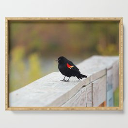 Red Winged Blackbird Serving Tray