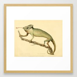"""""""The Chameleon"""" from the Leverian Collection, 1790s Framed Art Print"""