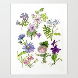 Botanical garden woodland wildflower nature art study Art Print
