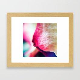 Rose petals Framed Art Print
