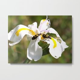 """""""Forest Iris Rendezvous"""" by ICA PAVON Metal Print"""