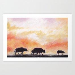 african buffalos Art Print