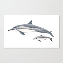 Long-beaked dolphin and baby Canvas Print
