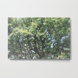 Oak tree #2 Metal Print