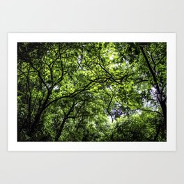 Lush Green Canopy in the Cloud Forest of the Chocoyero-El Brujo Nature Reserve in Nicaragua Art Print