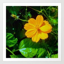Large-flower Tickseed Art Print