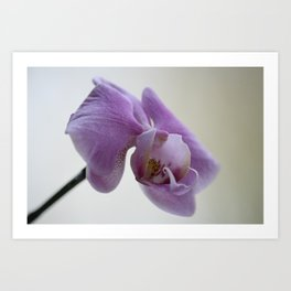 Orchid Photograph, pink and lilac flowers Art Print