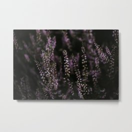Dutch purple heather at sunset | Colourful Travel Photography | Veluwe, Holland (The Netherlands) Metal Print