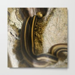 Two Bodies, One Head, Snakes in a Hollow Metal Print