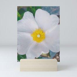 White Anemone Mini Art Print