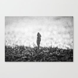 Staying in the shadow Canvas Print