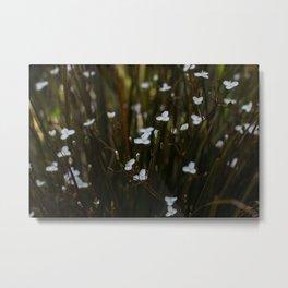 New Zealand Iris Metal Print